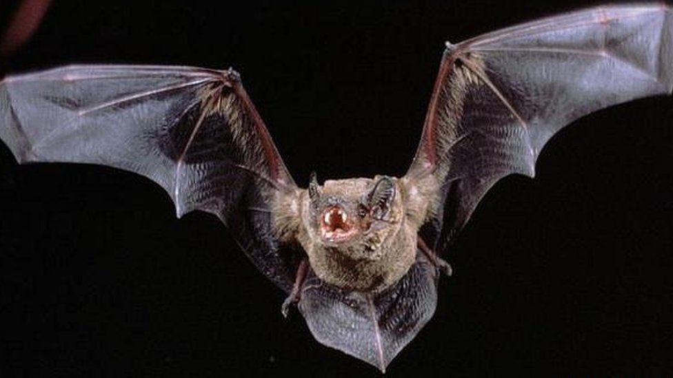 Norwich NDR bat bridges 'are not working'