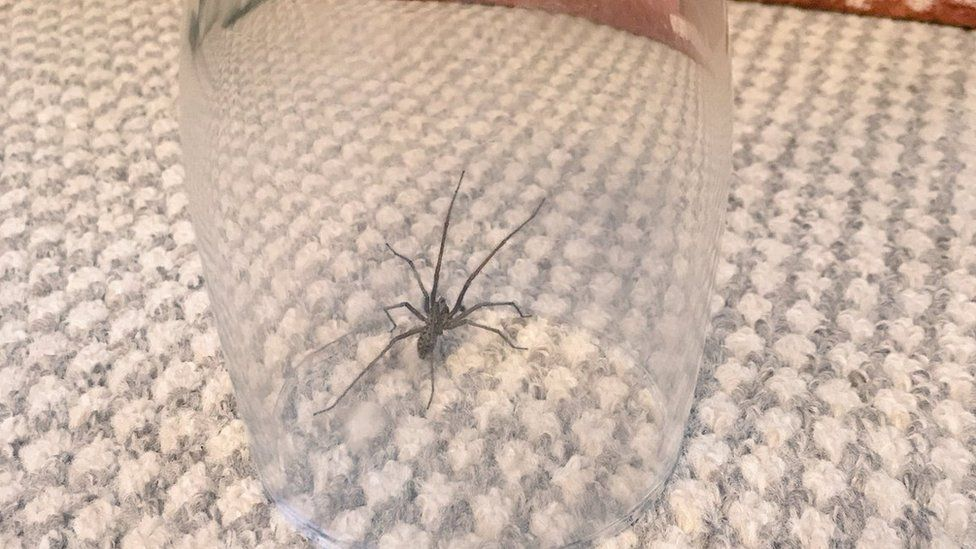 A spider in a pint glass