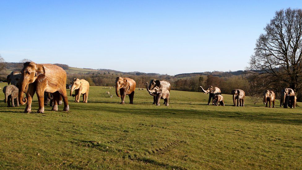 The CoExistence Herd at Sudeley Castle in Gloucestershire