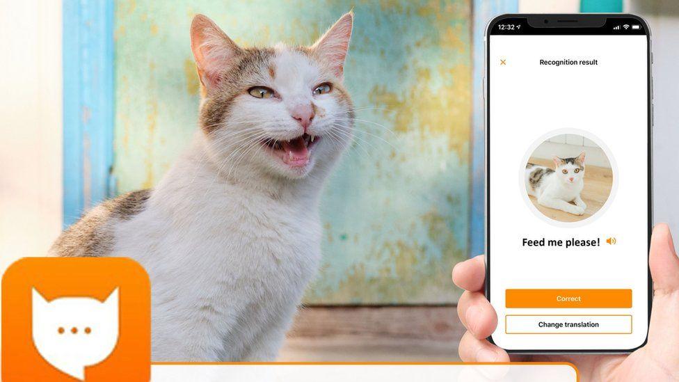 MeowTalk: Alexa developer's app to translate cat's miaow - BBC News