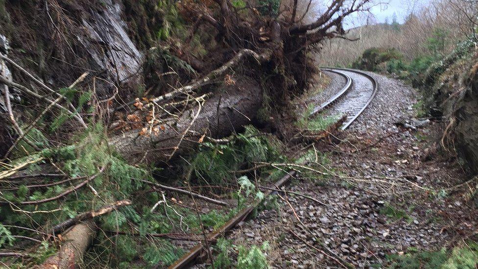 A tree fallen on the Blaenau Ffestiniog branch line