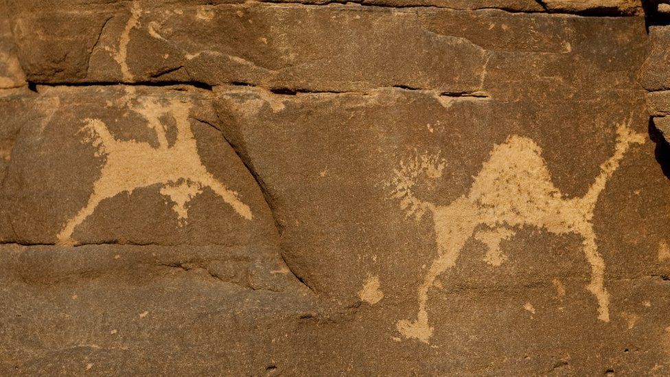 A petroglyph of camels in Saudi Arabia