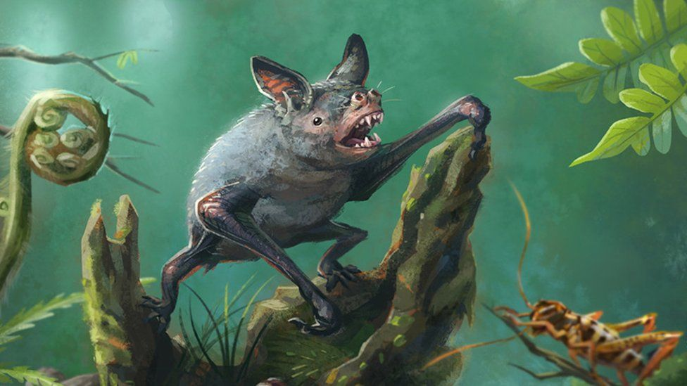 Artist's impression of another kind of extinct New Zealand burrowing bat, Mystacina robusta, that went extinct in the 1960s.