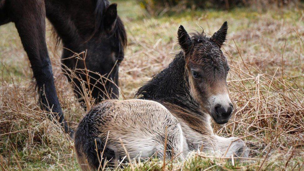 A small pony
