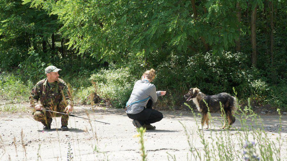 Волонтери намагаються поцілити в собаку транквілізатором