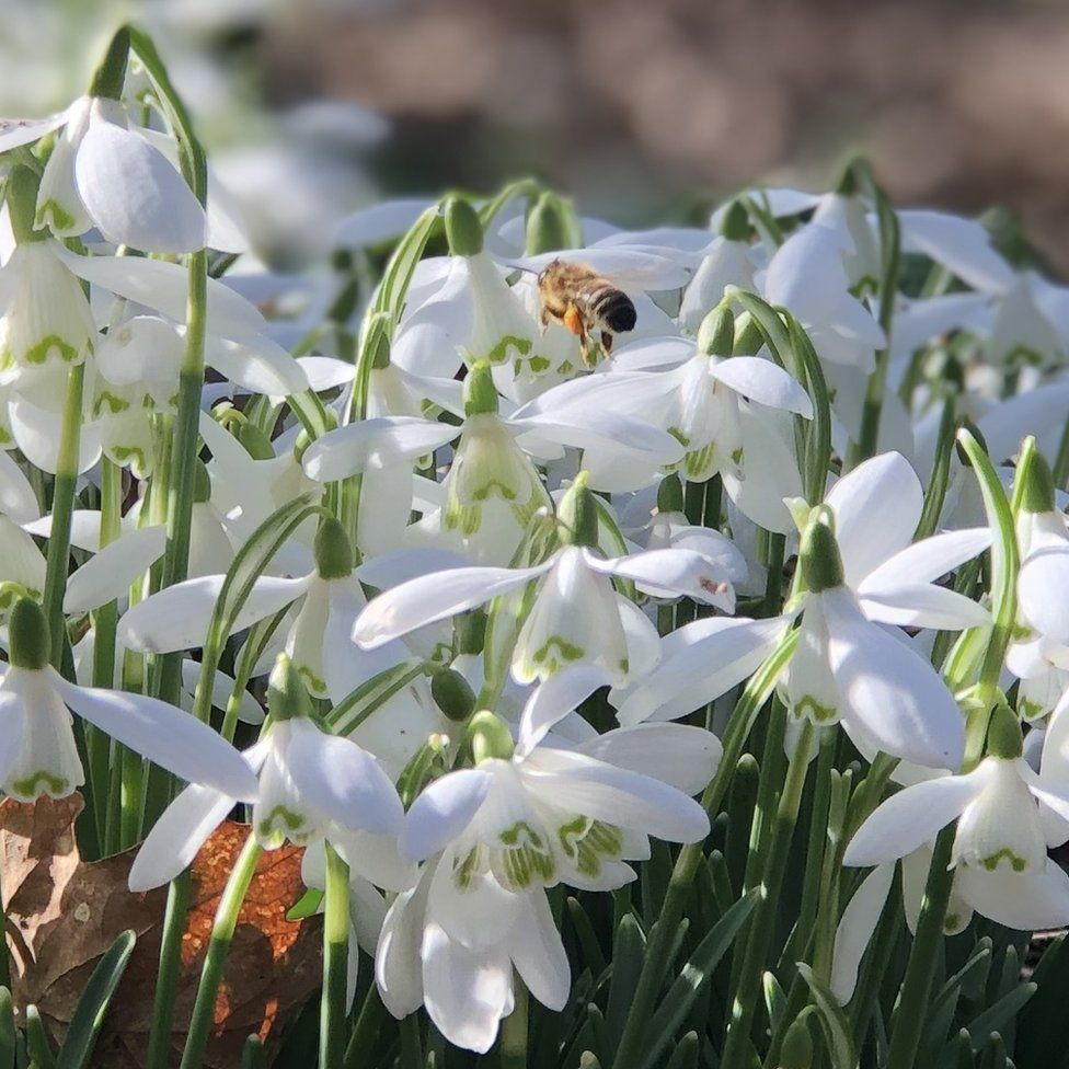 Flowers in bloom at Cheshire's Arley Hall and Gardens