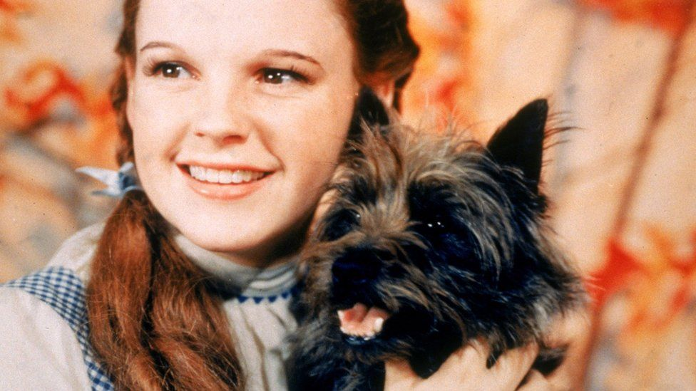 American actress Judy Garland as Dorothy Gale, holding Toto the dog for the film, The Wizard Of Oz