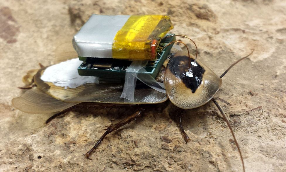 Cockroach with computer on its back