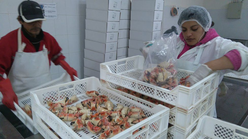 Two workers in the seafood processing plant