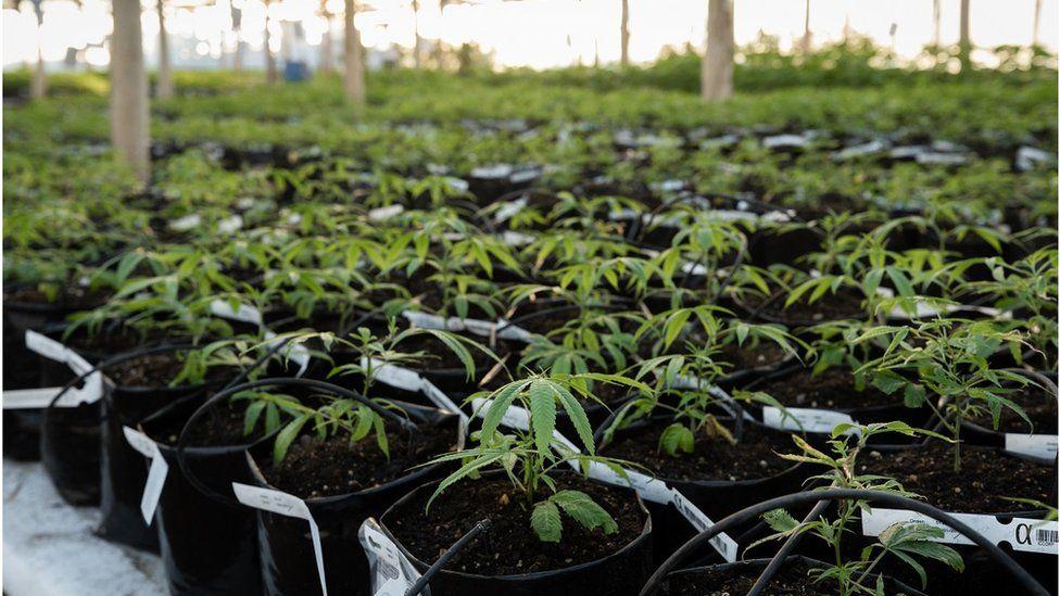 A pot farm