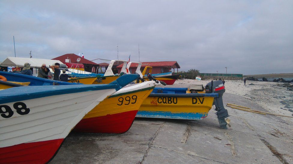 A view of some colourful boats in Punta de Choros