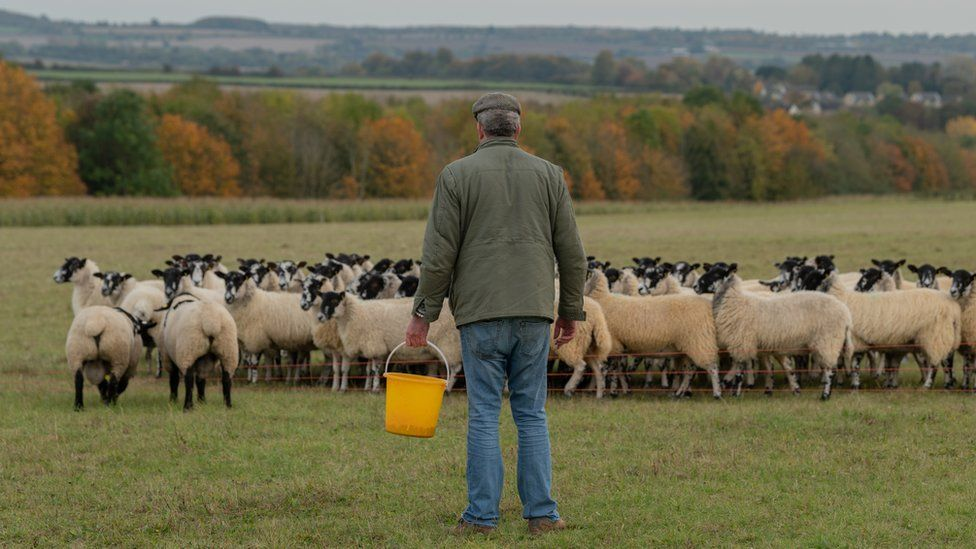 Jeremy Clarkson with sheep on his farm