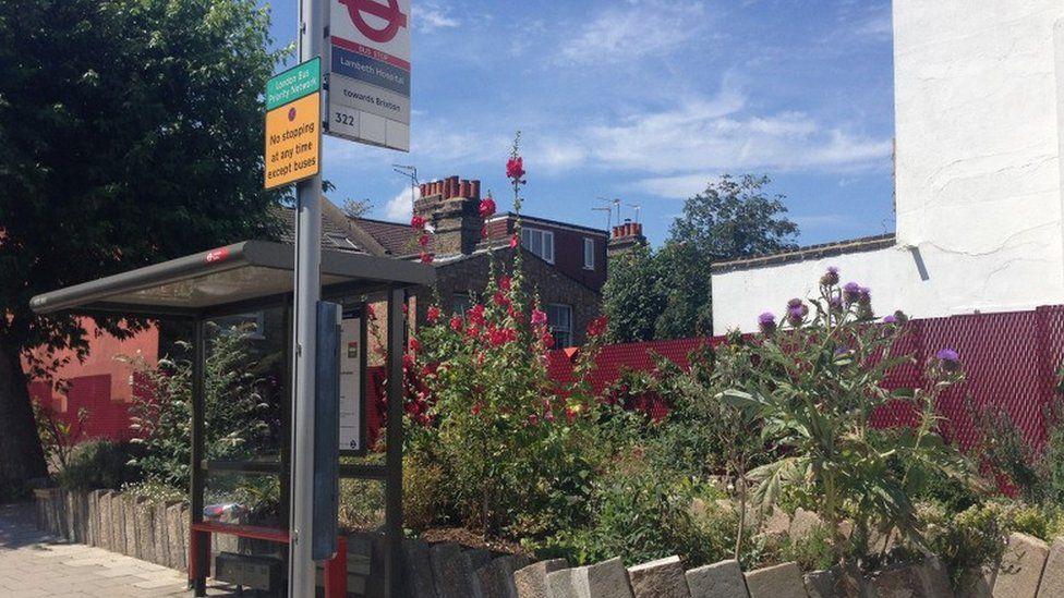 Garden next to a bus stop