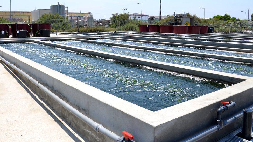 Seaweed farming Portugal