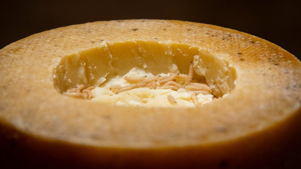 Cheese with maggots inside