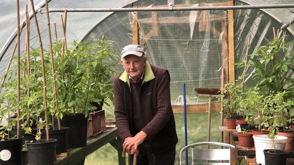 Bill Gosson in a greenhouse surrounded by tomato plants