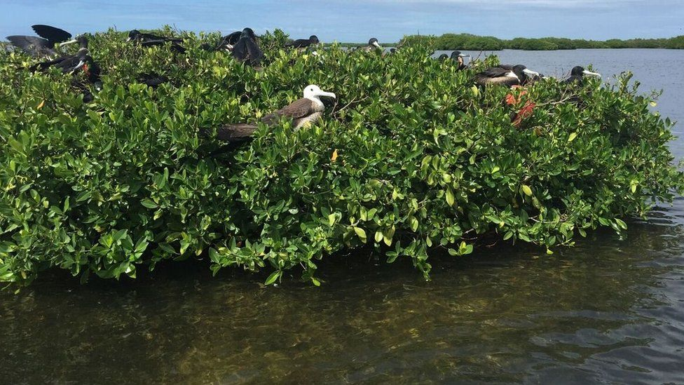Picture taken before the hurricane shows lush mangroves