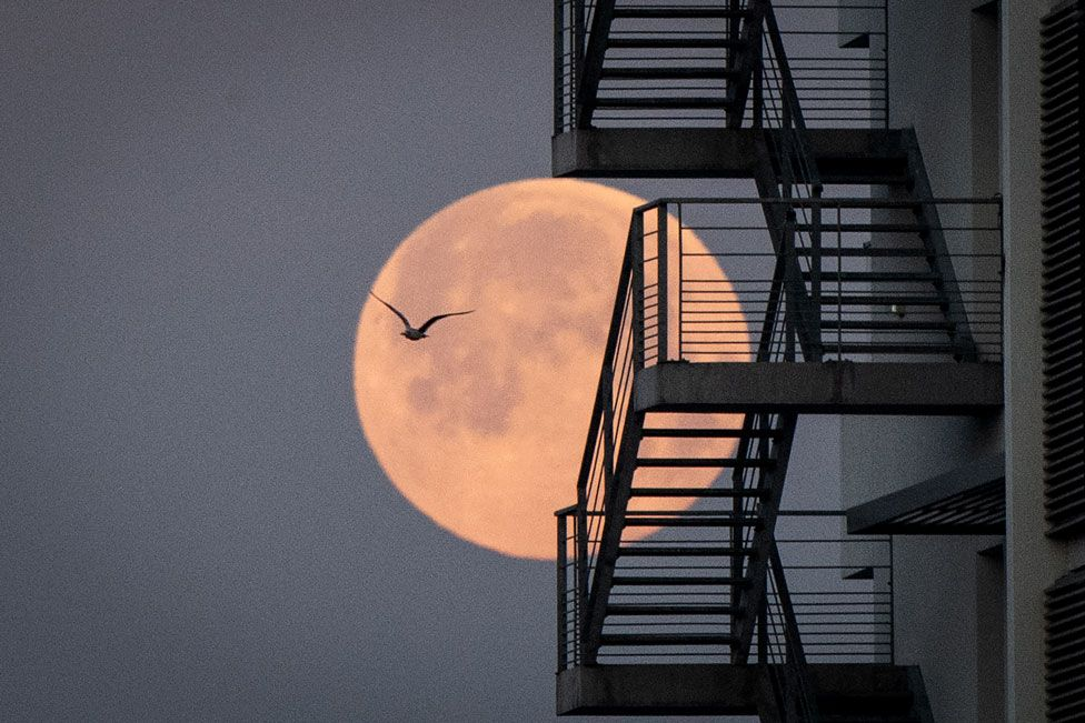 The pink supermoon seen against metal stairs in Lorient, western France