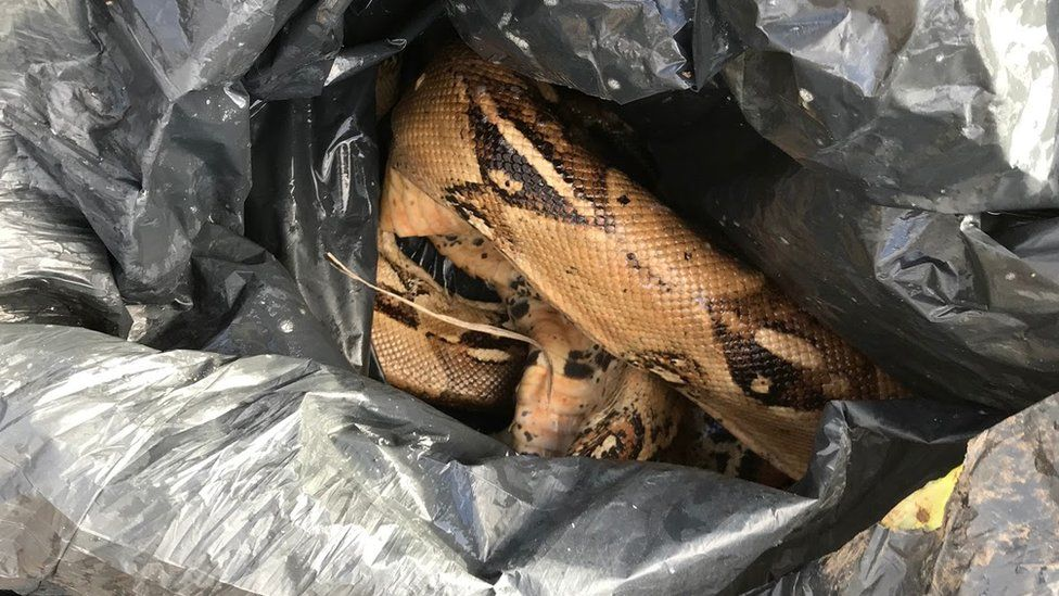 The RSPCA found two dead boa constrictors dumped in a Coventry park