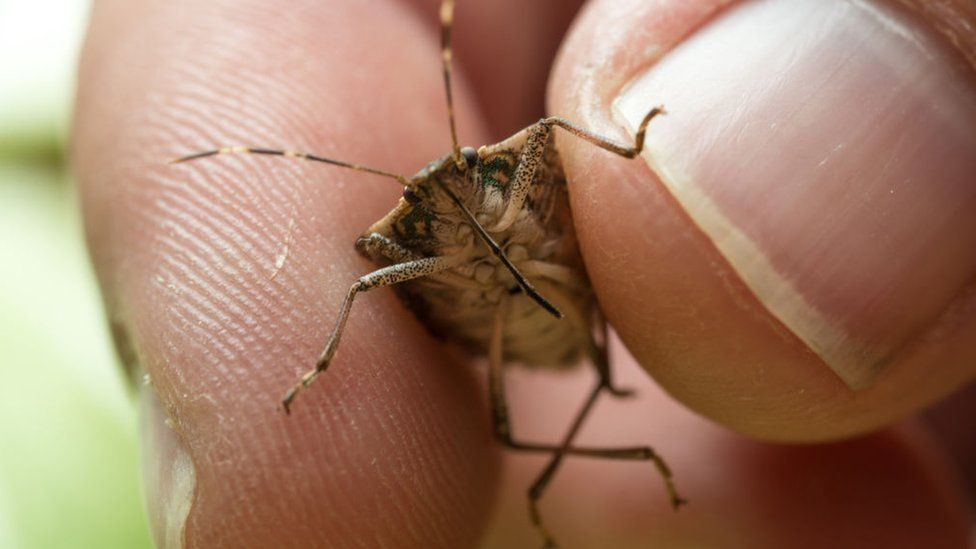 Bug Bug Check