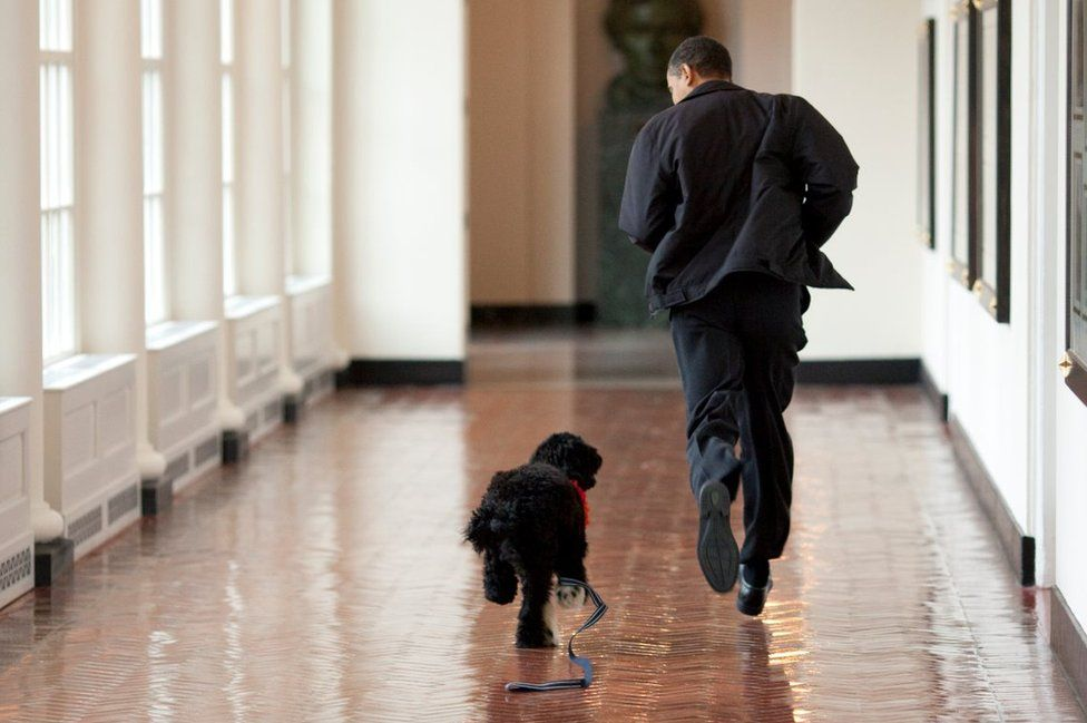 US President Barack Obama runs down a corridor with Bo when he was a puppy.