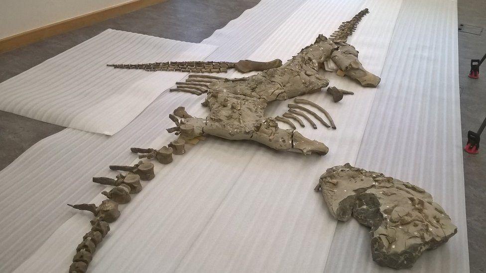 Análise de fóssil raro de monstro jurássico aponta para descoberta de nova espécie
