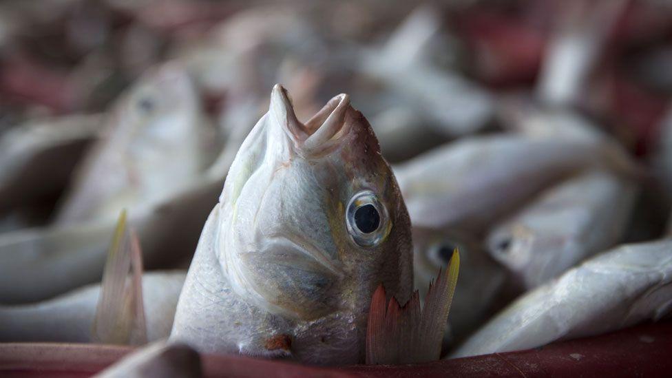 Fish caught in Thailand