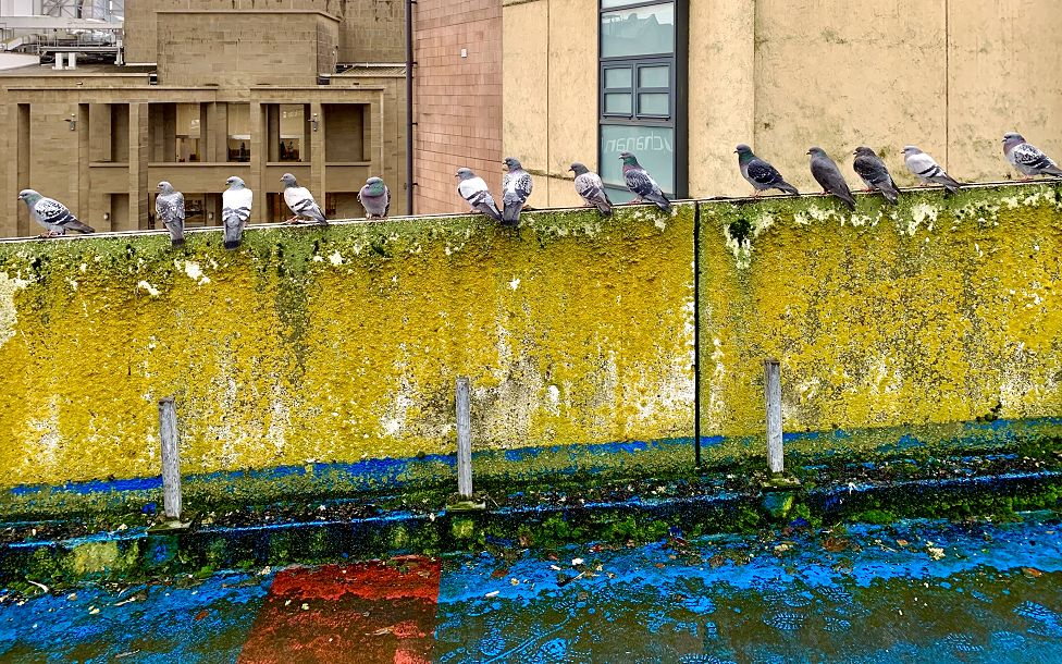 Pigeons on a car park wall