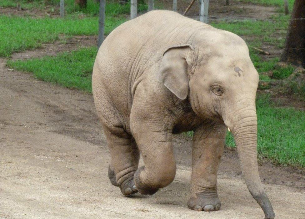 Baby elephant at Elephant Nature Park in northern Thailand