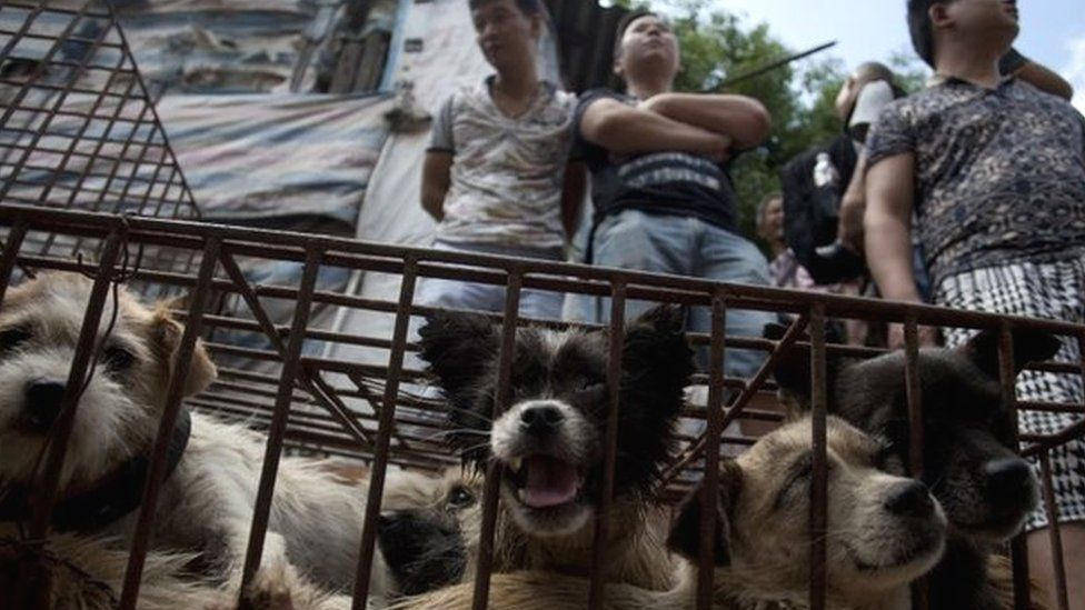 Vendors wait for customers to buy dogs in cages at a market in Yulin, in southern China's Guangxi province on June 21, 2015.