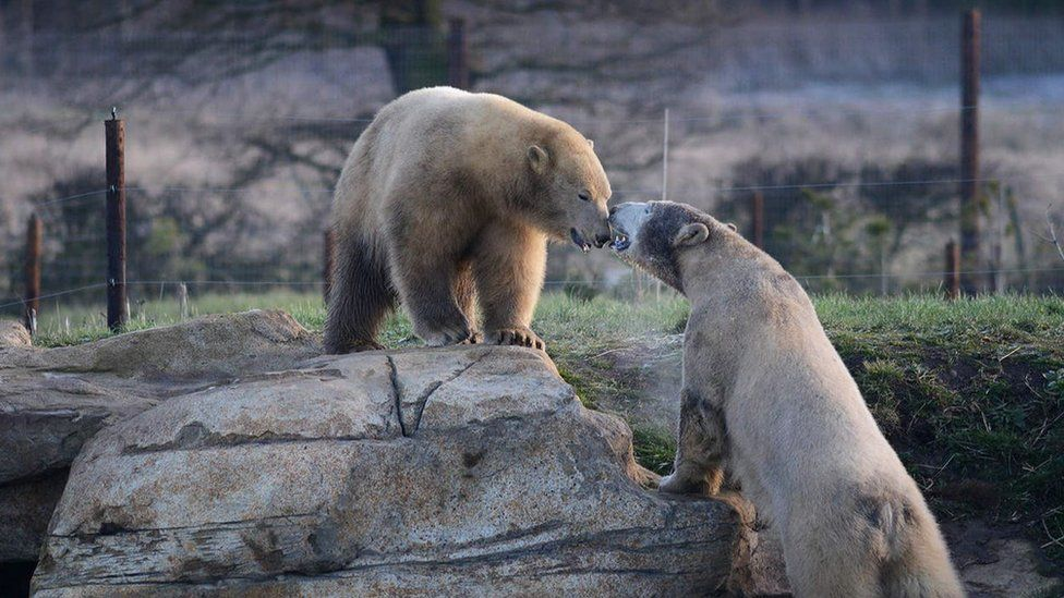 Yorkshire Wildlife Park's special habitat for its polar bears