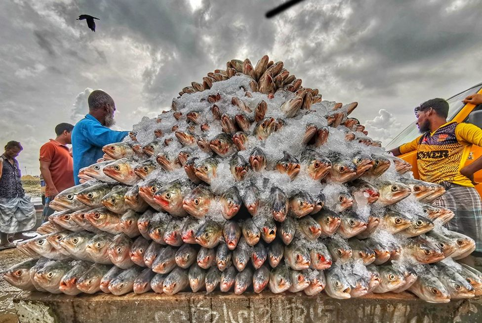 كومة من الأسماك