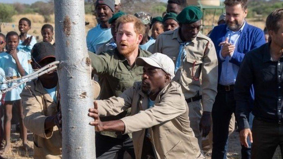 Prince Harry planting tree