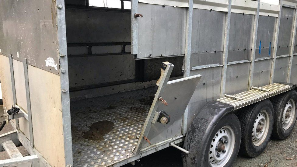 Damage to a trailer after a cow became trapped in the side