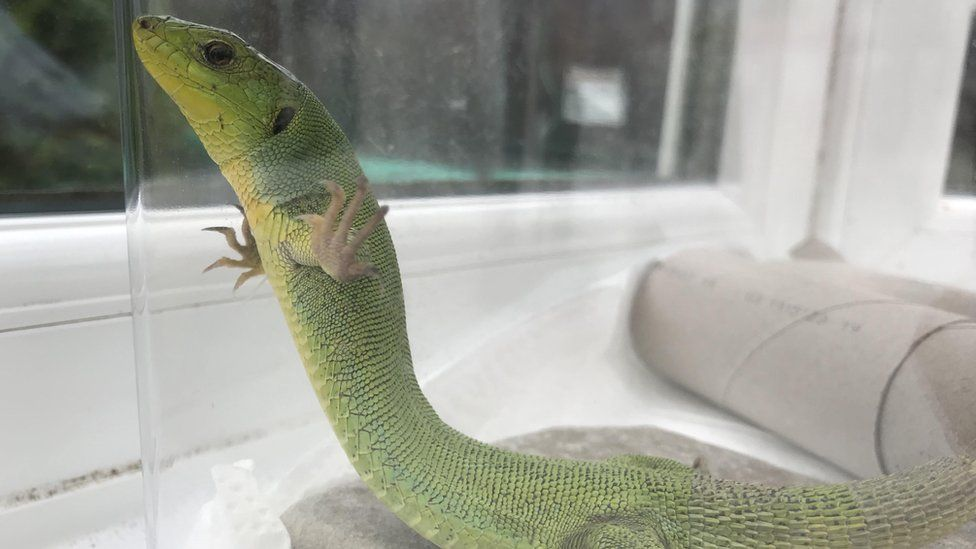 Lizard and scorpion hitch ride in holiday baggage, RSPCA list reveals