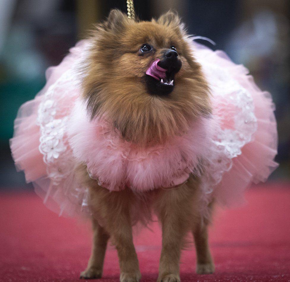 Dog in a pink tutu