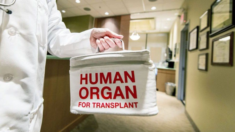 Organnau