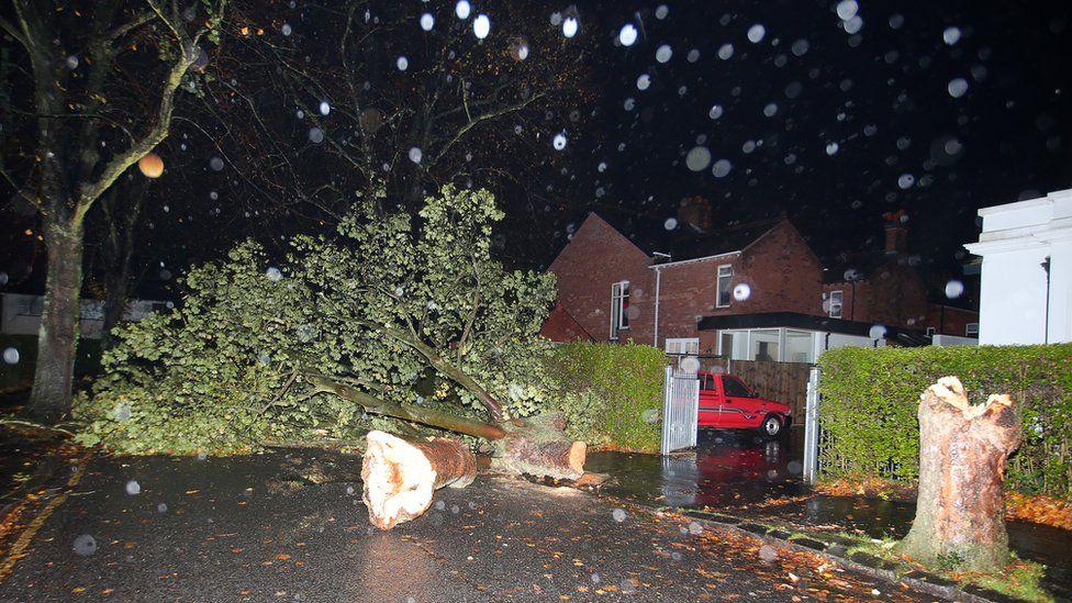 A fallen tree blocks a street off the Upper Newtownards Road in east Belfast
