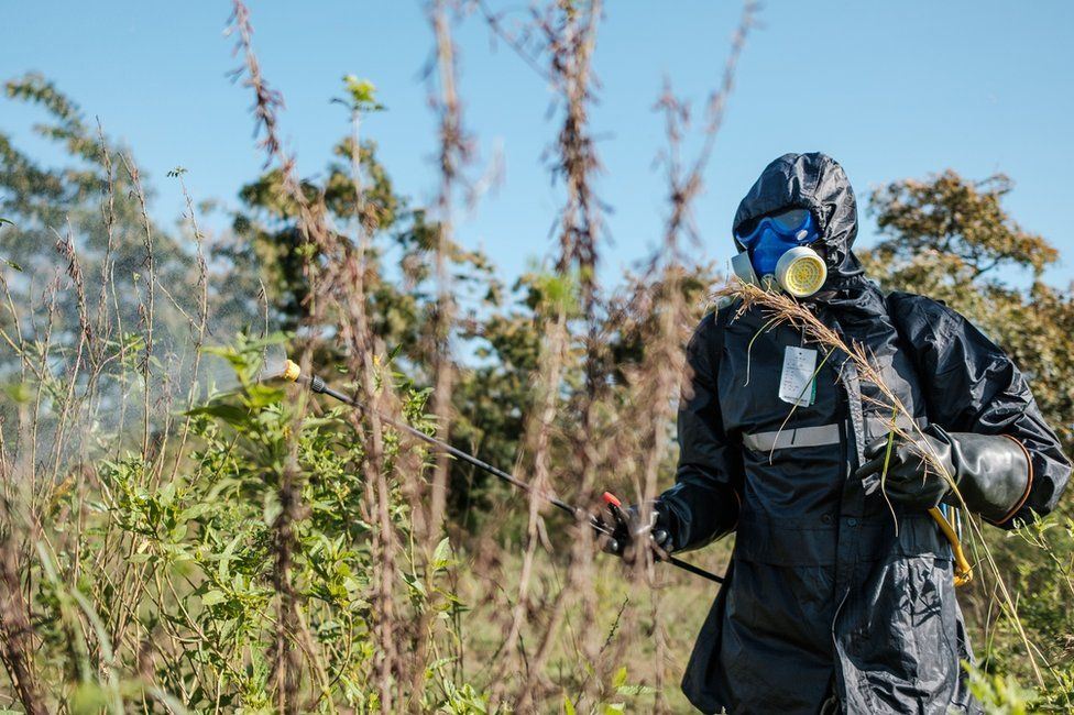 A soldier sprays plants with insecticides