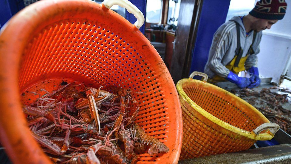 Scotland's live seafood industry