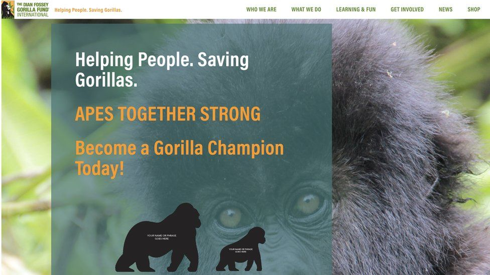 A screen grab of The Dian Fossey Gorilla Fund