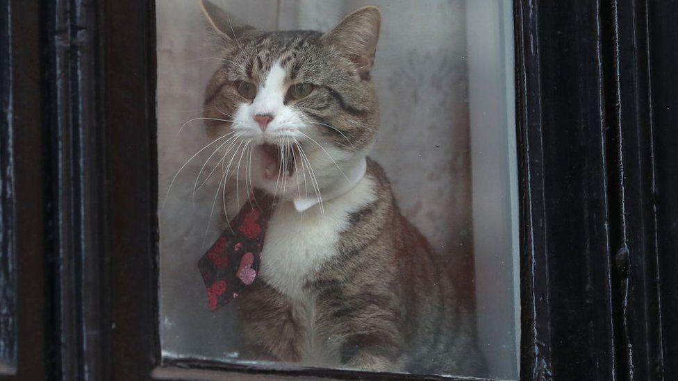 Кіт Ассанжа