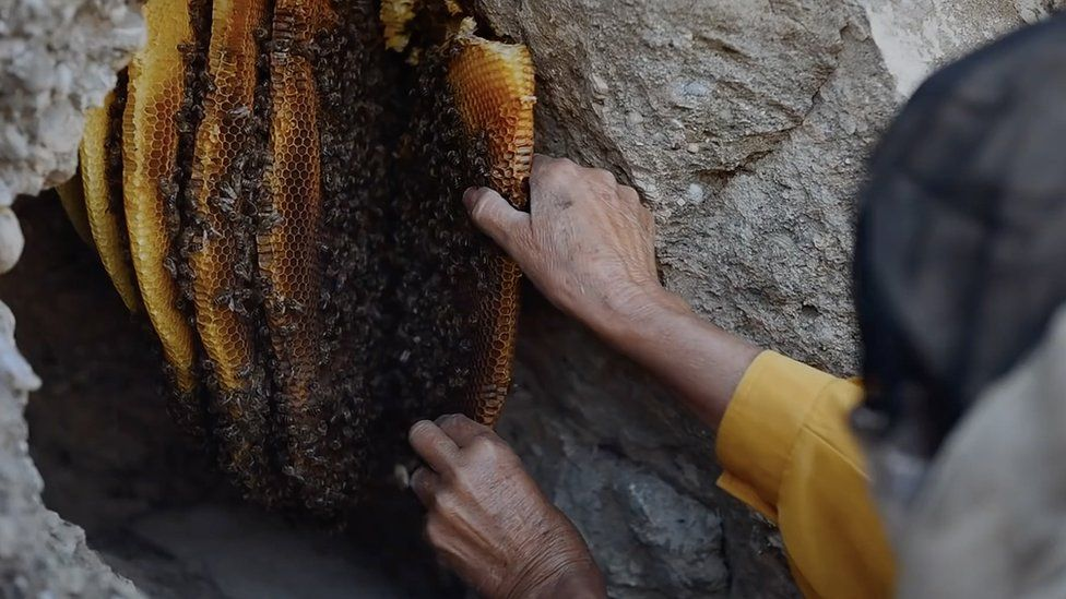 Hatidze harvesting honey
