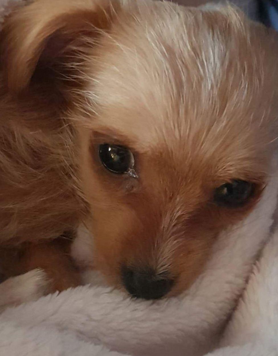 A close up of Daisy