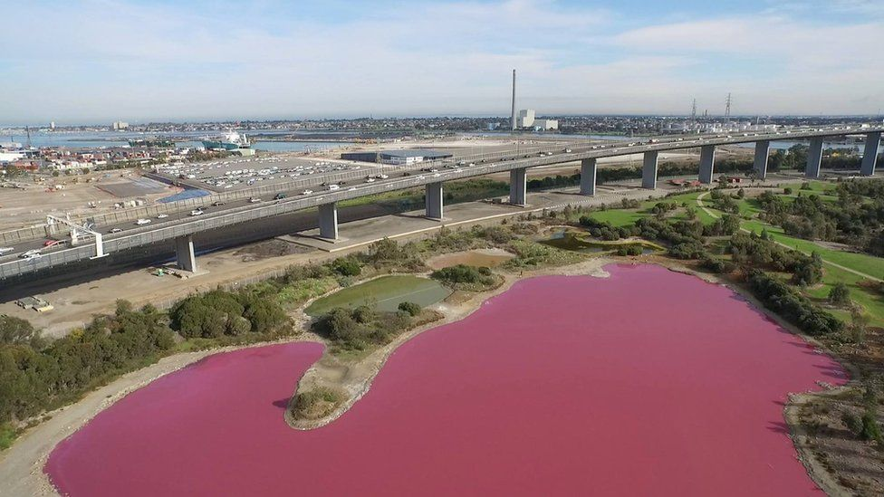 A salt lake in Melbourne which has temporarily turned pink