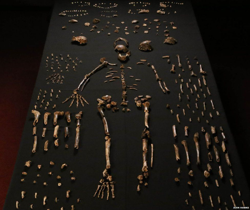 Naledi Skeleton