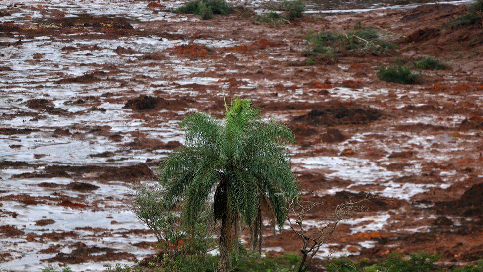 Brumadinho: Justiça libera acesso a dados sobre sinal de celulares para auxiliar na localização de desaparecidos