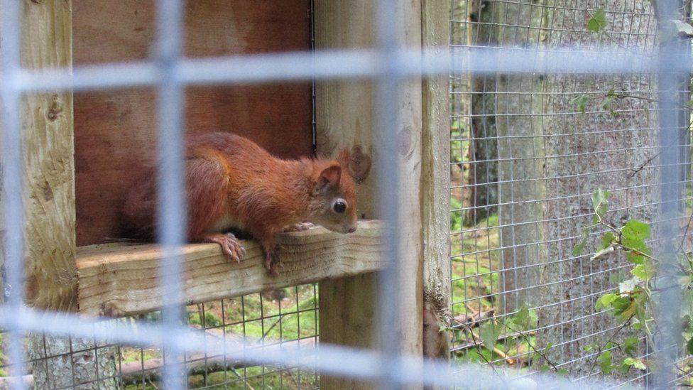 A squirrel in an enclosure