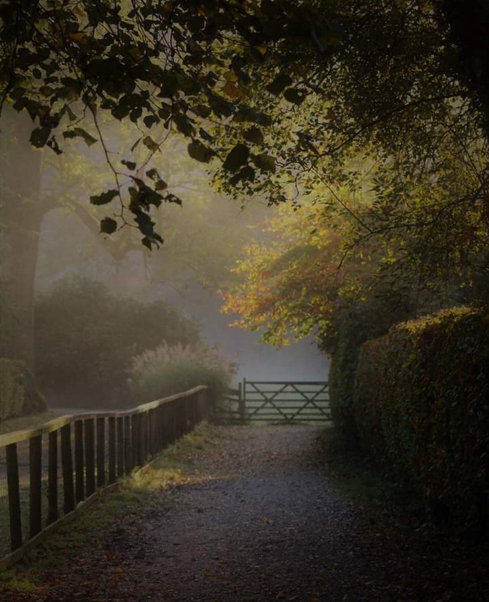 Foggy woodland path