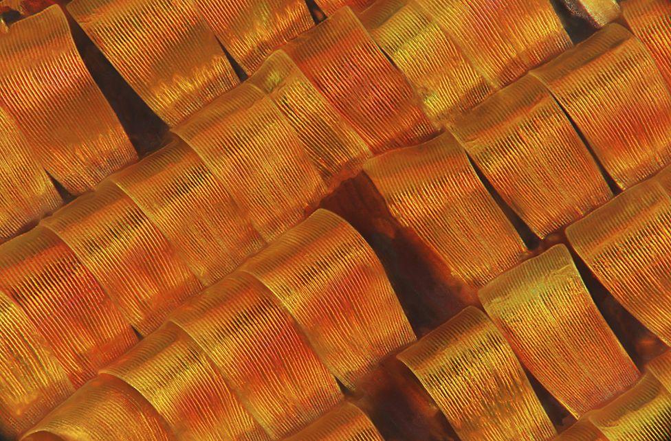 Moth scales - Mark R Smith, Macroscopic Solutions